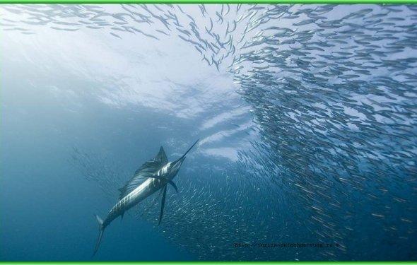 Рыбы в Индийском океане