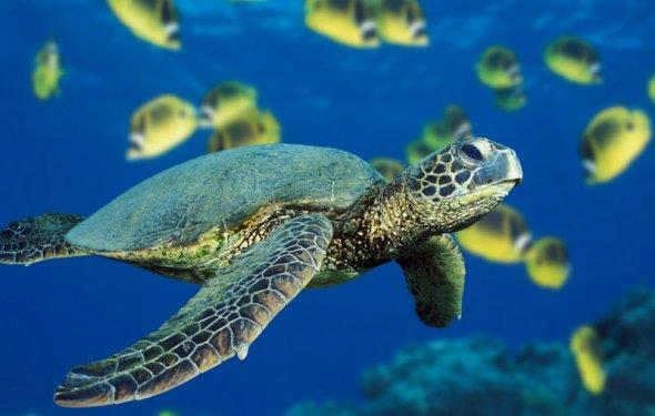 Багамы туры цены 2015